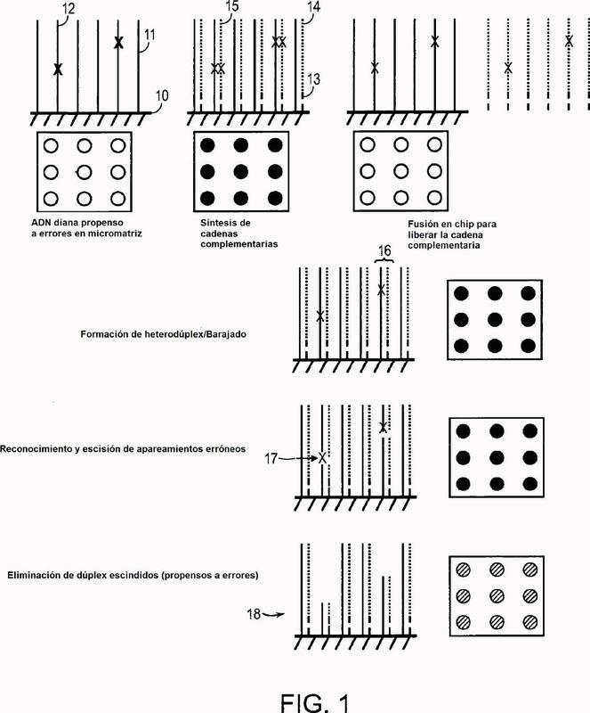 Métodos y aparatos para la reducción de errores en el ADN basada en un chip.