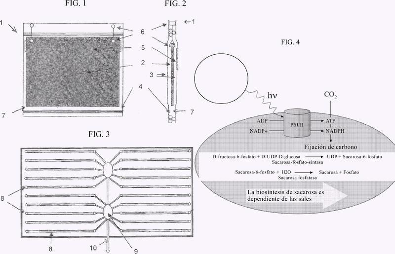 Microorganismos fotosintéticos transgénicos y fotobiorreactor.