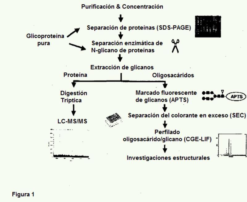 Método para la identificación de alta productividad de carbohidratos y de los patrones de composición de mezclas de carbohidratos así como sistemas para el mismo.