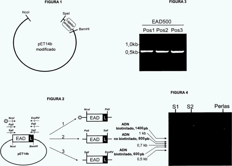 Métodos de generación y examen para polipéptidos quiméricos líticos.