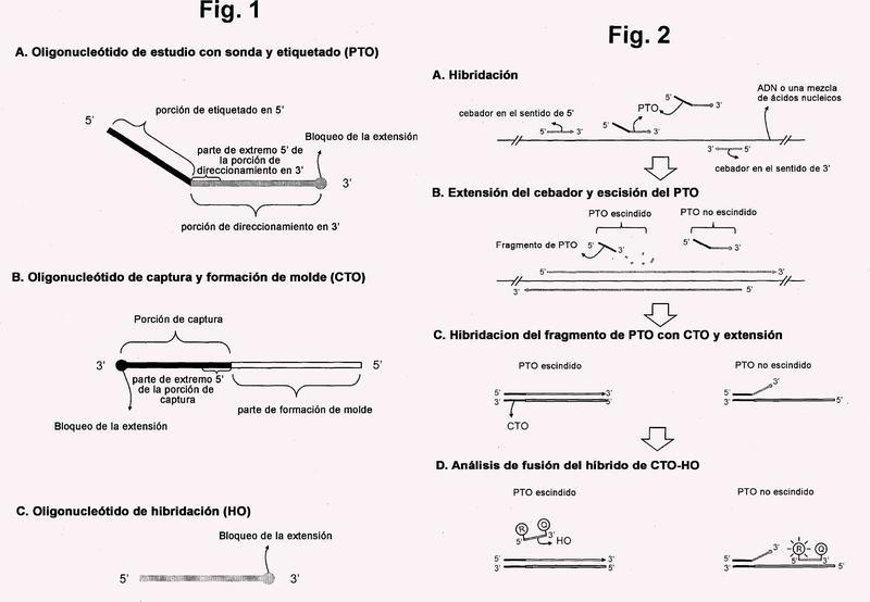 Detección de una secuencia de ácido nucleico diana mediante ensayo sin hibridación dependiente de escisión y extensión de PTO.