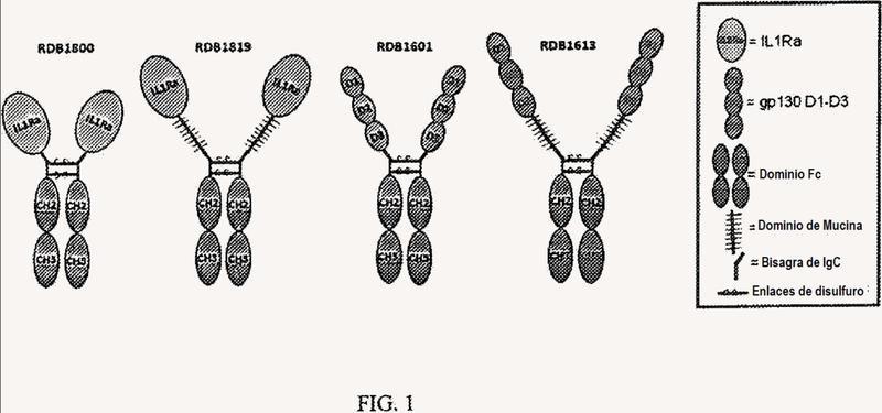 Polipéptidos de fusión que comprenden ligador de polipéptidos de dominio de mucina.