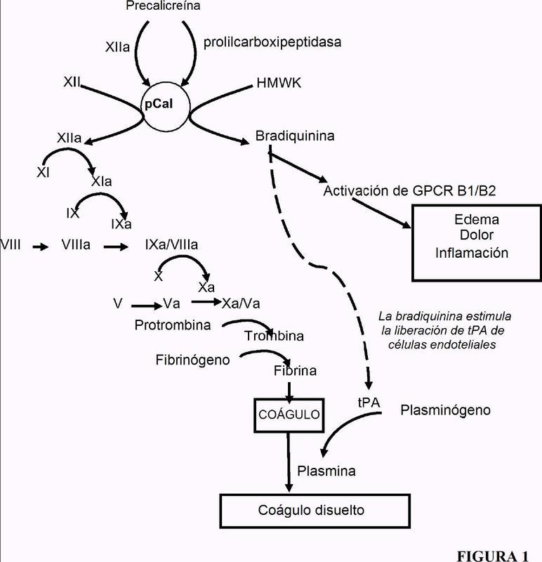 Proteínas de unión a calicreína plasmática.