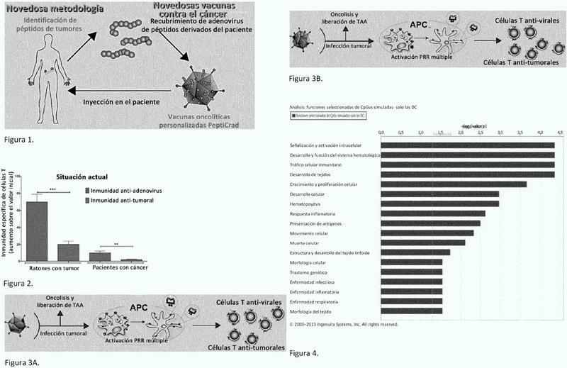 Adenovirus oncolíticos recubiertos para vacunas contra el cáncer.