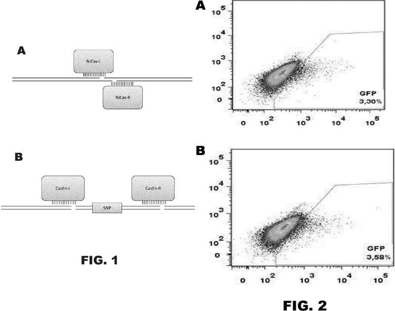 Modificación y regulación del genoma basada en CRISPR.
