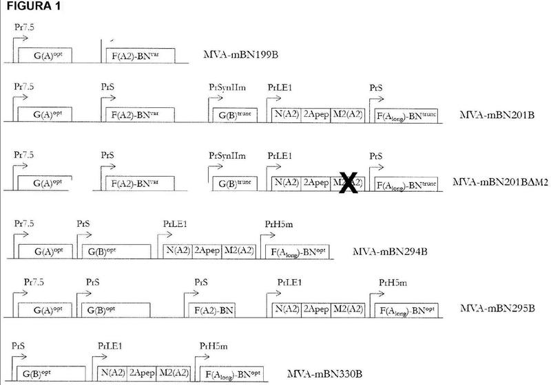 Vacuna de virus vaccinia modificado de Ankara (MVA) recombinante para el virus sincicial respiratorio (VRS).