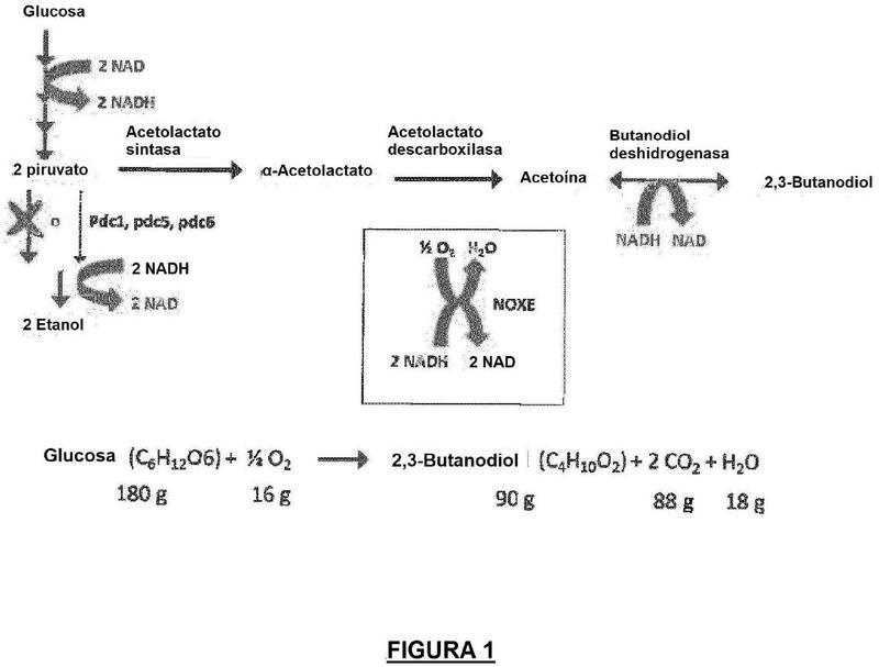 Cepas de microorganismo para la producción de 2,3-butanodiol.