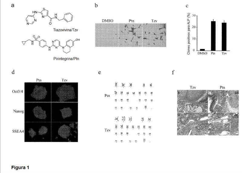 Cultivos de células madre.