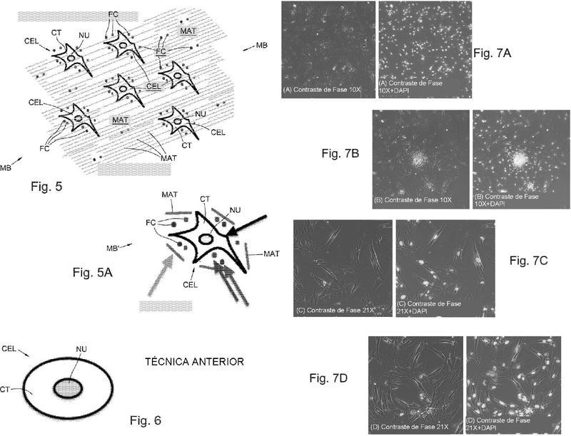 Ilustración 3 de la Galería de ilustraciones de Dispositivo de disgregación de material biológico y método de fabricación correspondiente y método para la preparación de suspensiones celulares y microinjertos de tejido