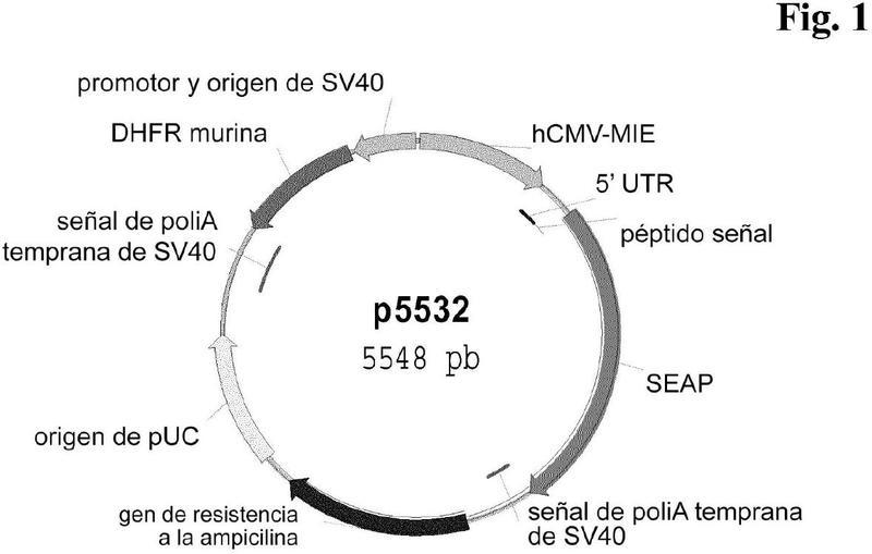 Procedimiento para la producción de polipéptidos.