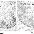 Ilustración 1 de Regulación de la biomasa y tolerancia al estrés de plantas.