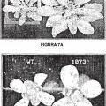 Ilustración 2 de Regulación de la biomasa y tolerancia al estrés de plantas.