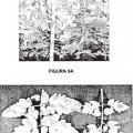 Ilustración 4 de Regulación de la biomasa y tolerancia al estrés de plantas.