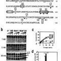 Ilustración 3 de Mutantes de la citidina desaminasa inducida por activación (AID) y procedimientos de uso.
