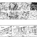 Ilustración 3 de Células madre multipotentes postnatales de ligamento periodontal humano y sus usos.