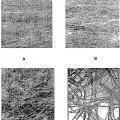 Ilustración 6 de Material textil no tejido a base de fibras multicomponente explotadas o divisibles.