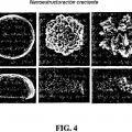 Ilustración 4 de Microelectrodos nanoestructurados y dispositivos de biodetección que los incorporan.