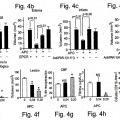Ilustración 4 de La actividad neuroprotectora de la proteína C activada es independiente de su actividad anticoagulante.