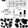 Ilustración 2 de Aislamiento y/o identificación de células madre con potencial de diferenciación adipocitario, condrocitario y pancreático.