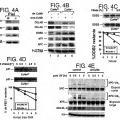 Ilustración 2 de Sustancias y composiciones para potenciar la reparación de ADN y procedimientos de uso.