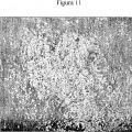 Ilustración 2 de Factor de permisividad celular para virus, y usos del mismo.