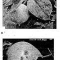 Ilustración 1 de Nuevos microorganismos que controlan los patógenos de plantas