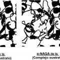 Ilustración 1 de Composición farmacéutica para terapia de reemplazo enzimático.