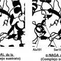 Ilustración 2 de Composición farmacéutica para terapia de reemplazo enzimático.