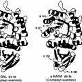 Ilustración 4 de Composición farmacéutica para terapia de reemplazo enzimático.
