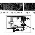 Ilustración 1 de Métodos de expansión de células y usos de células y de medios de acondicionamiento producidos por los mismos para terapia.