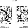 Ilustración 2 de Nueva enzima altamente funcional que tiene especificidad de sustrato modificada.
