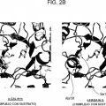 Ilustración 3 de Nueva enzima altamente funcional que tiene especificidad de sustrato modificada.