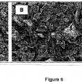 Ilustración 6 de Formas polimórficas novedosas de (L)-arginina de perindoprilo y proceso para la preparación de las mismas.