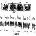 Ilustración 3 de Virus de la gripe porcina modificado por ingeniería genética y usos de los mismos.